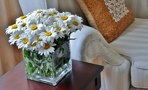 A glass vase of Daisies photographed indoors with a comfortable Wing chair and cushion.